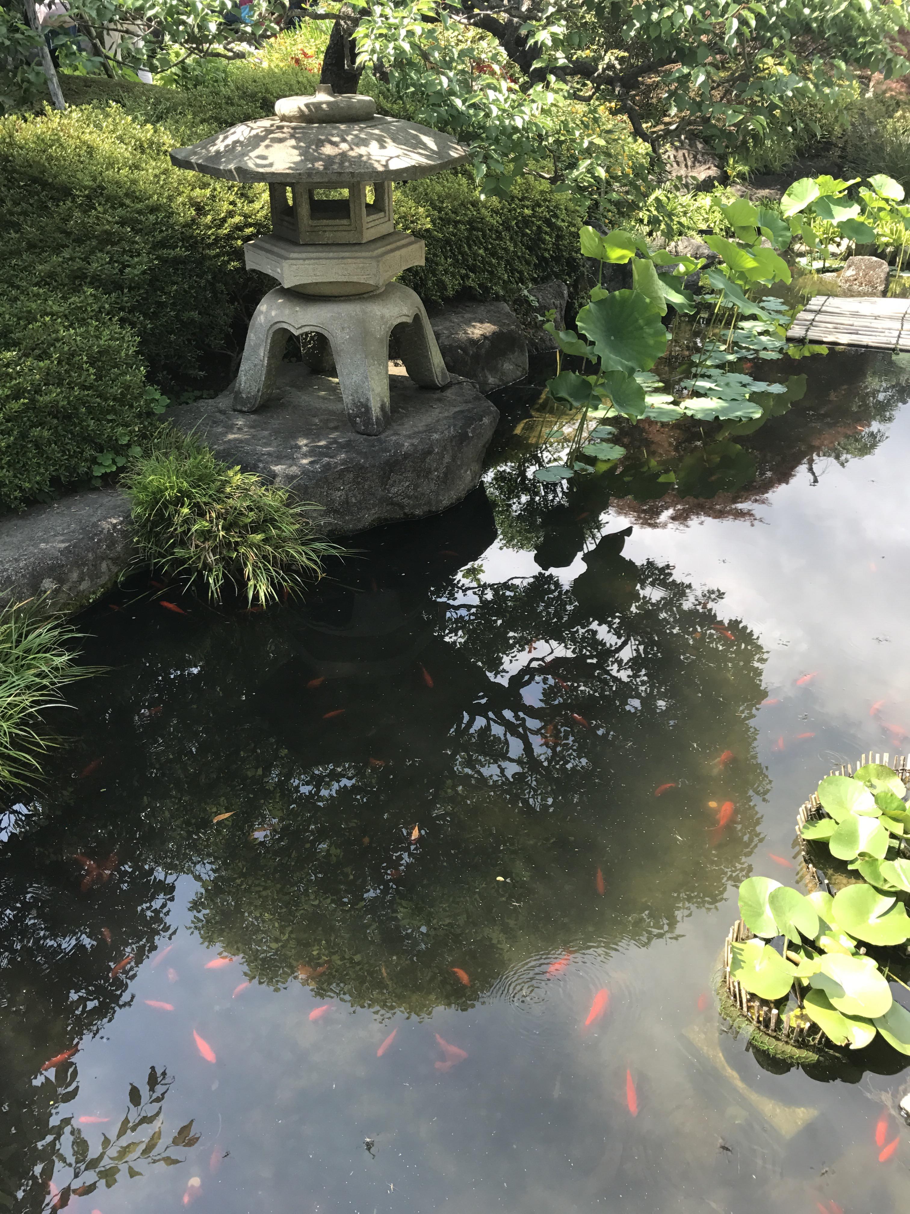 Something fucking fish pond